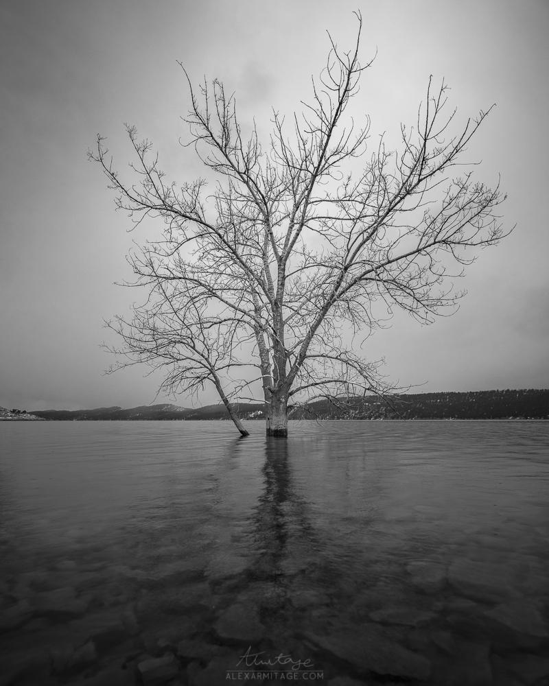 overcast black and white tree