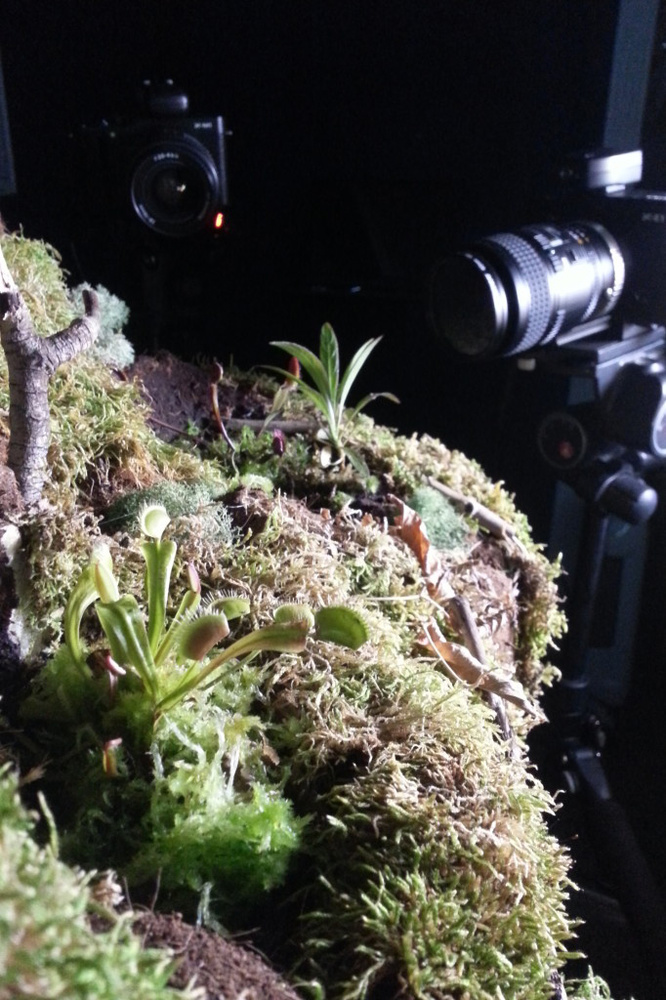 Shooting Red Dragon on the Carnivorous Plant Set