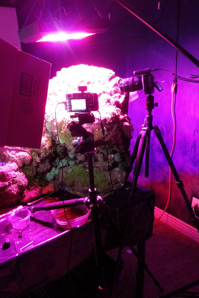Carnivorous plant set in use with LED lighting