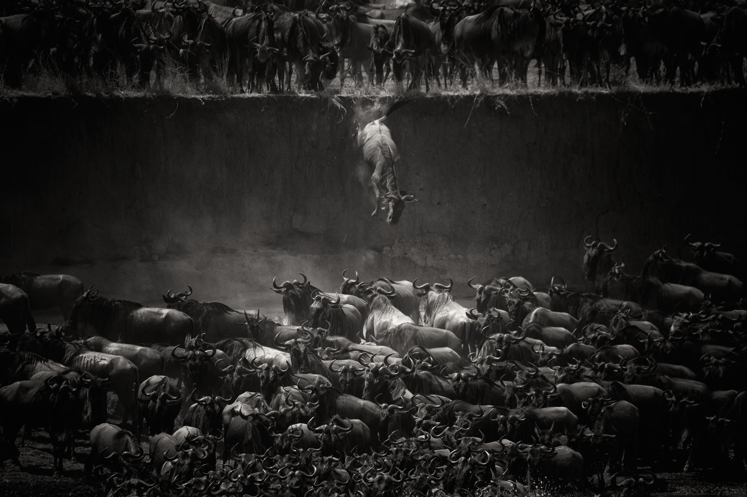 Nature Winner Nicole Cambre, Brussels, Belgium The Great Migration