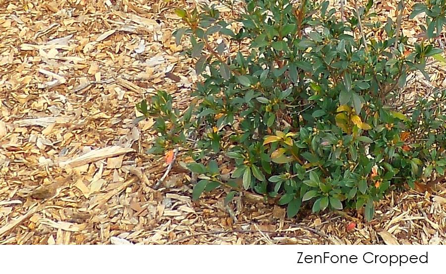 zenFone Cropped