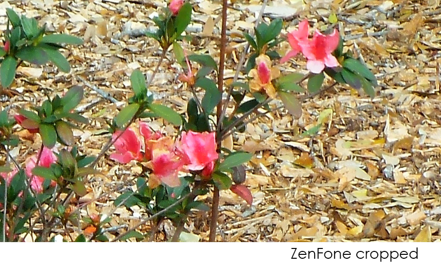 zenFone Cropped zoomed