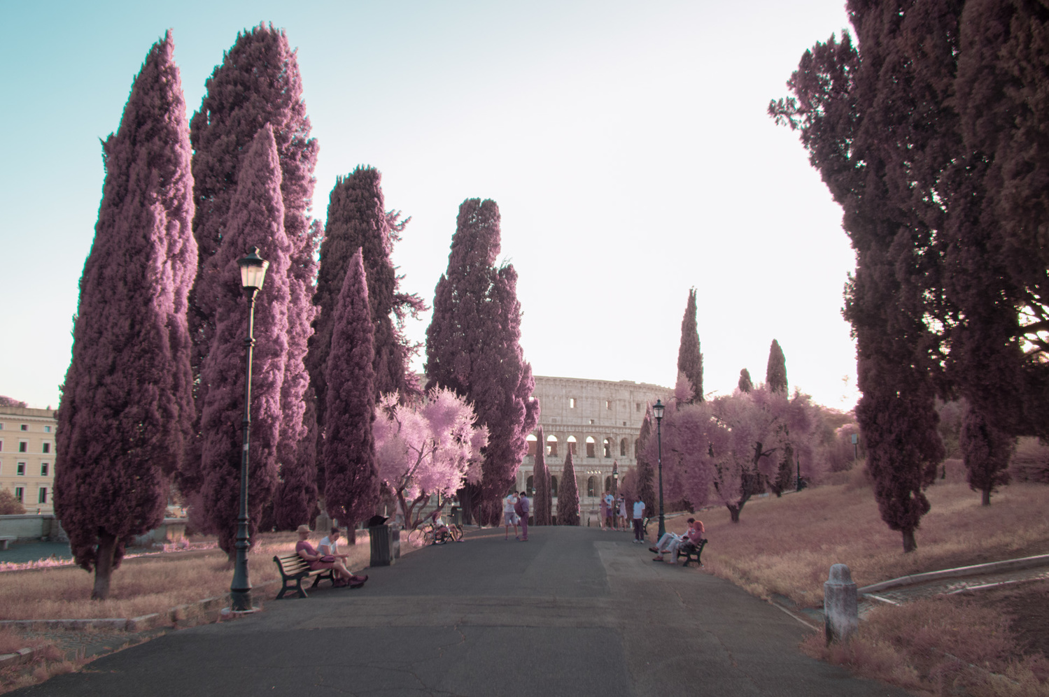Cypress trees near the Colosseum in Rome