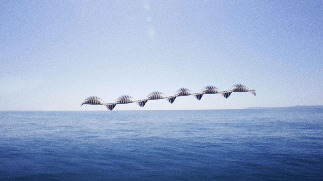 xavi-bou-birds-composite-ornitographies-photography-3