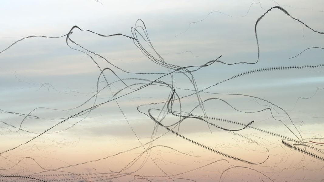 xavi-bou-birds-composite-ornitographies-photography-4