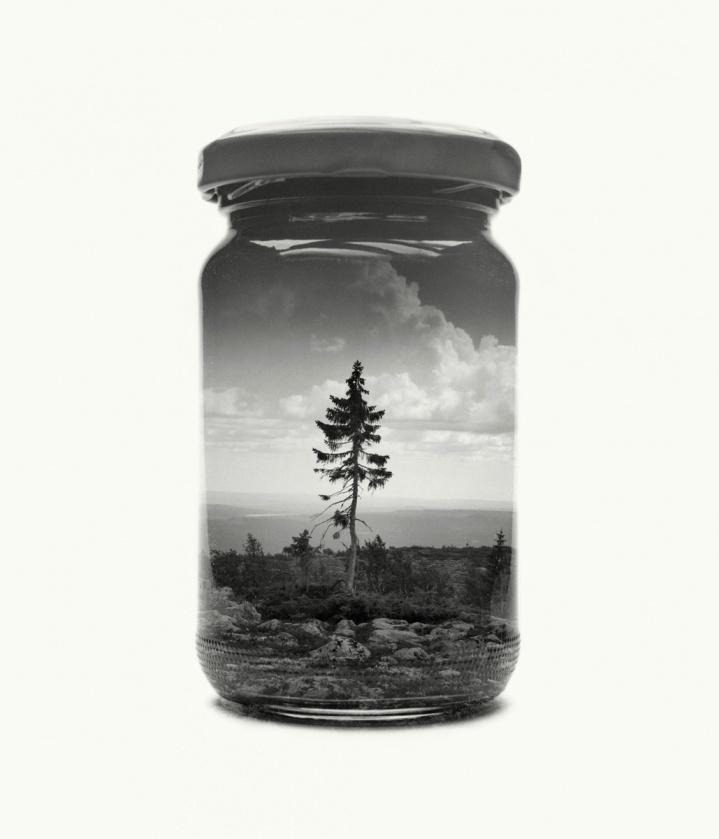 Tree, jar, clouds