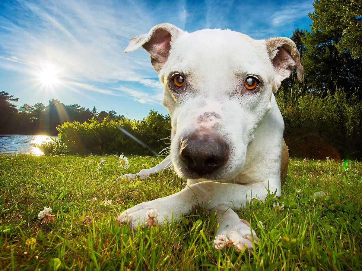 Three Reasons To Go Ultra Wide When Photographing Dogs