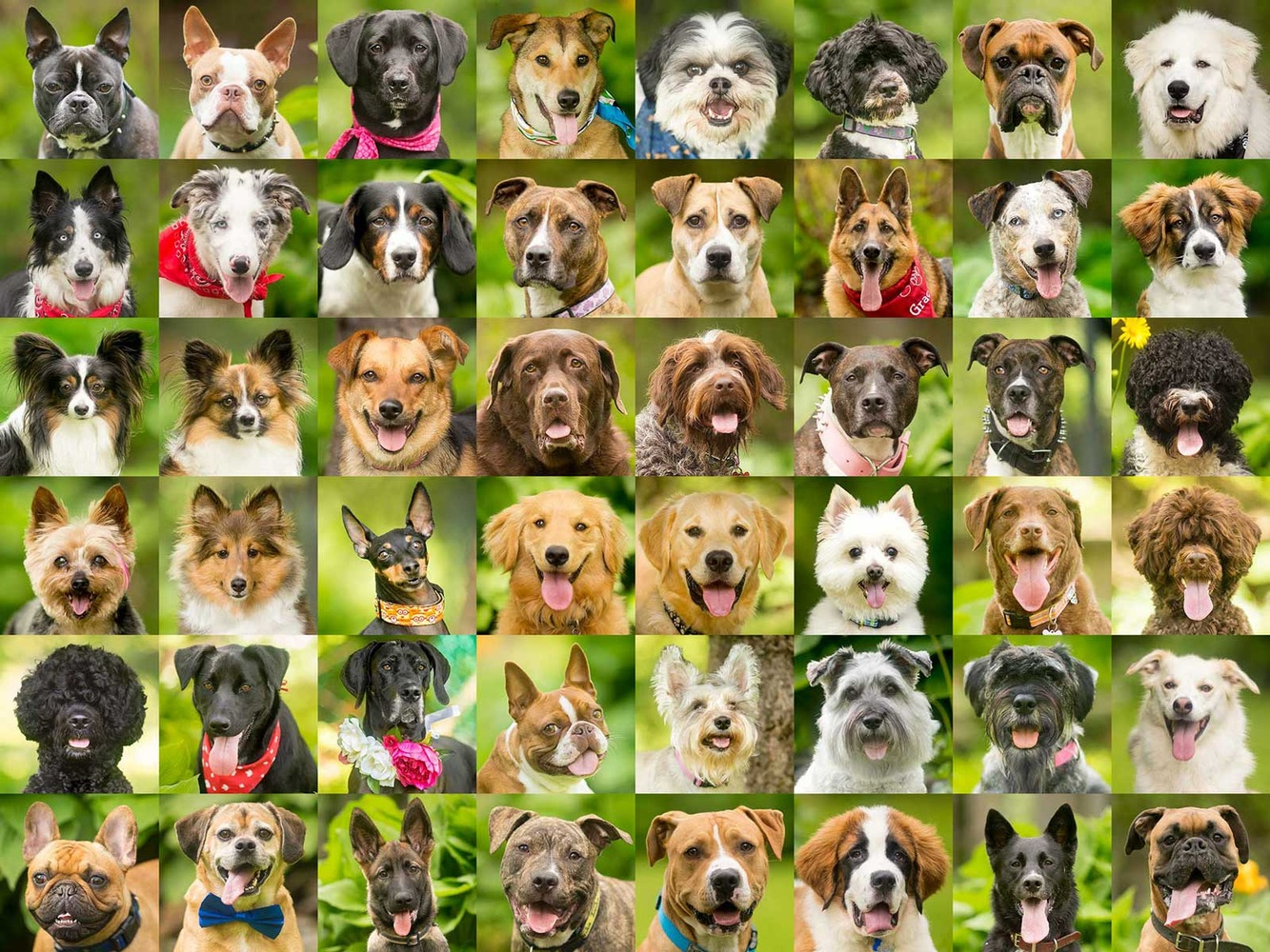 headshots of various dog breeds
