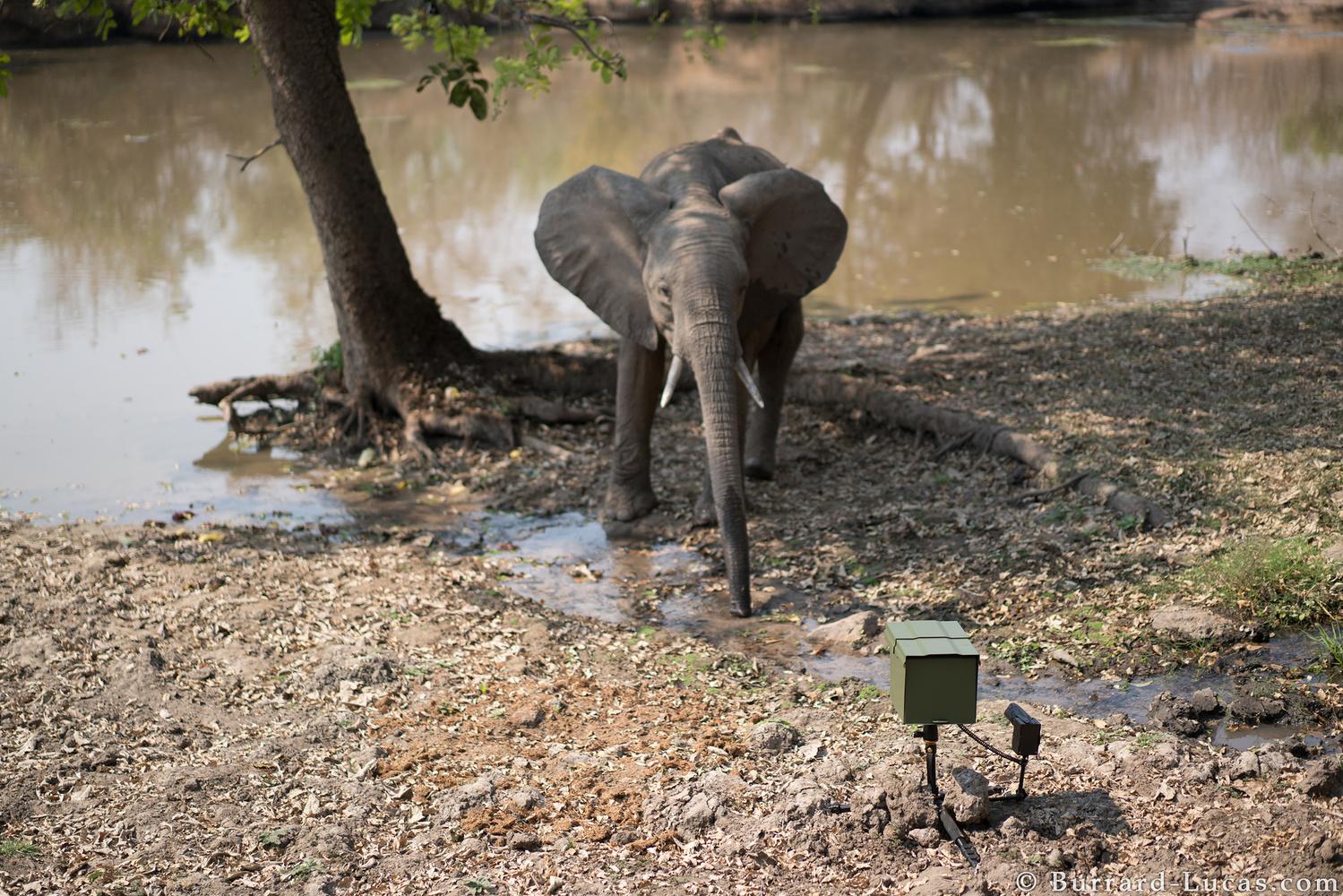 Camera Trap Wildlife Photography