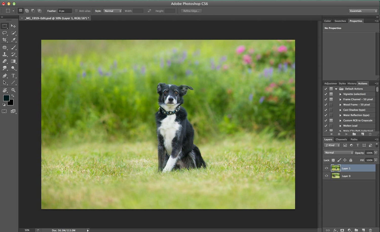 Compositing a dog group photo - Step 1
