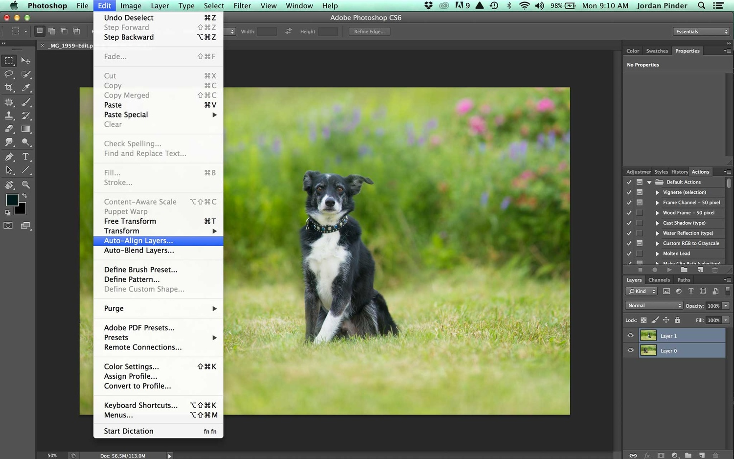 Compositing a dog group photo - Step 2