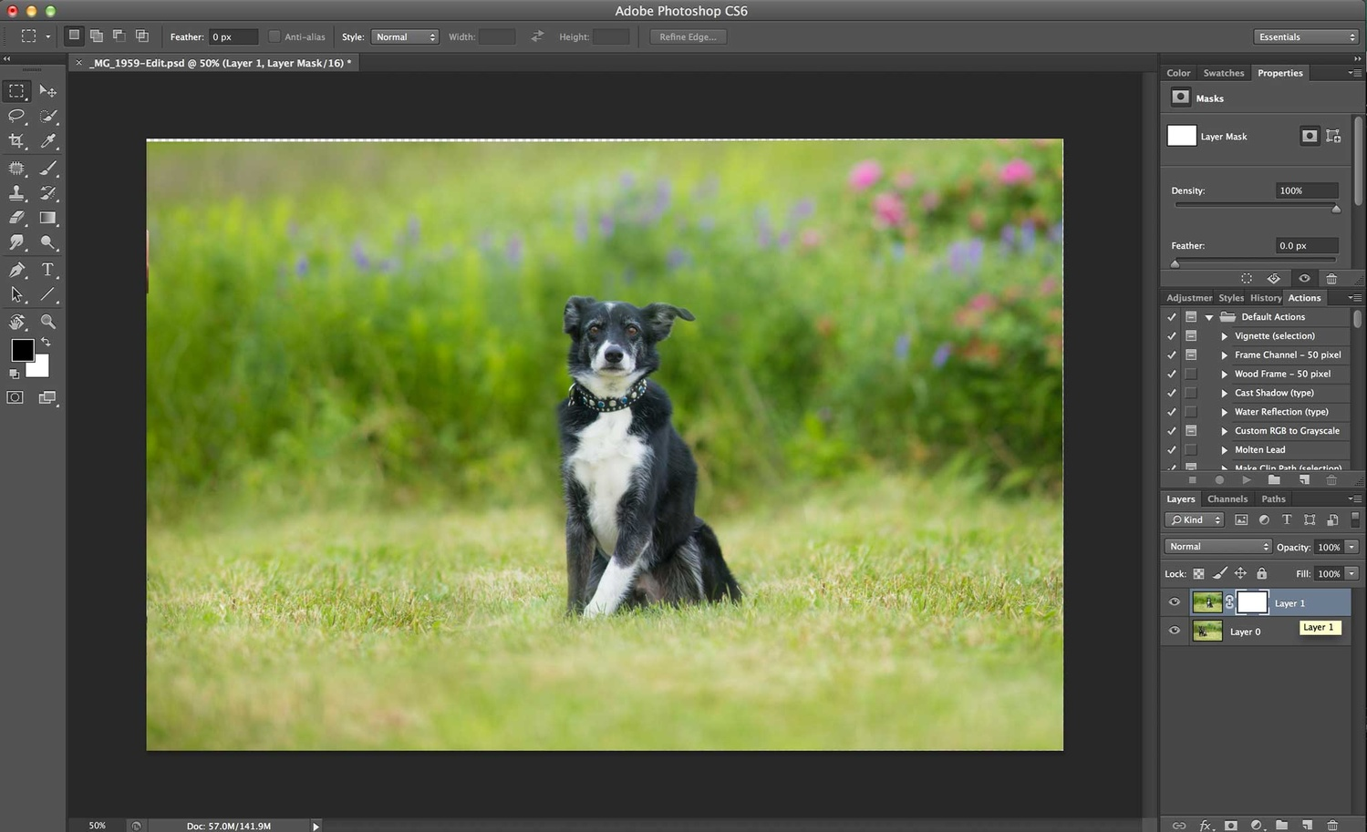 Compositing a dog group photo - Step 3