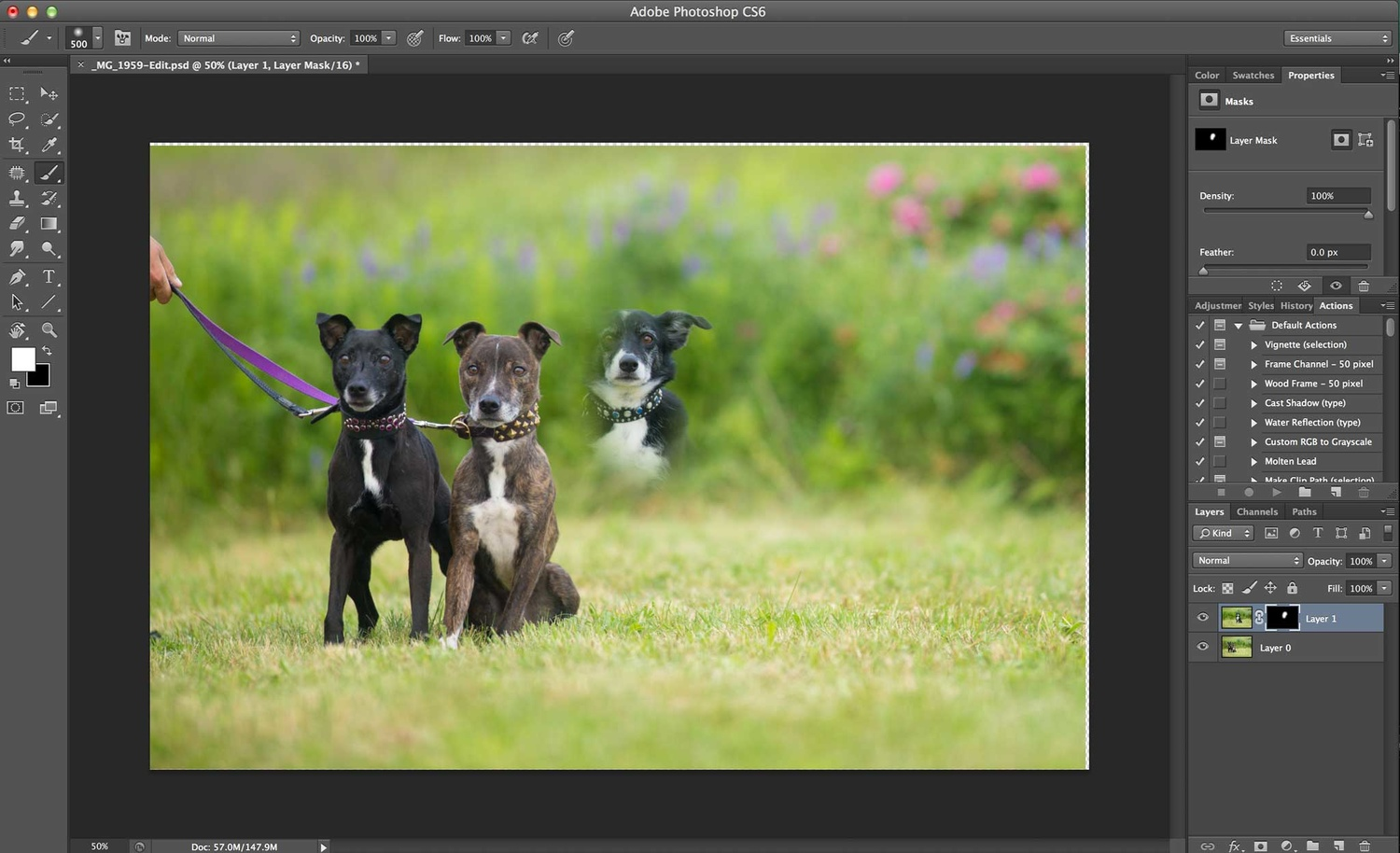 Compositing a dog group photo - Step 4