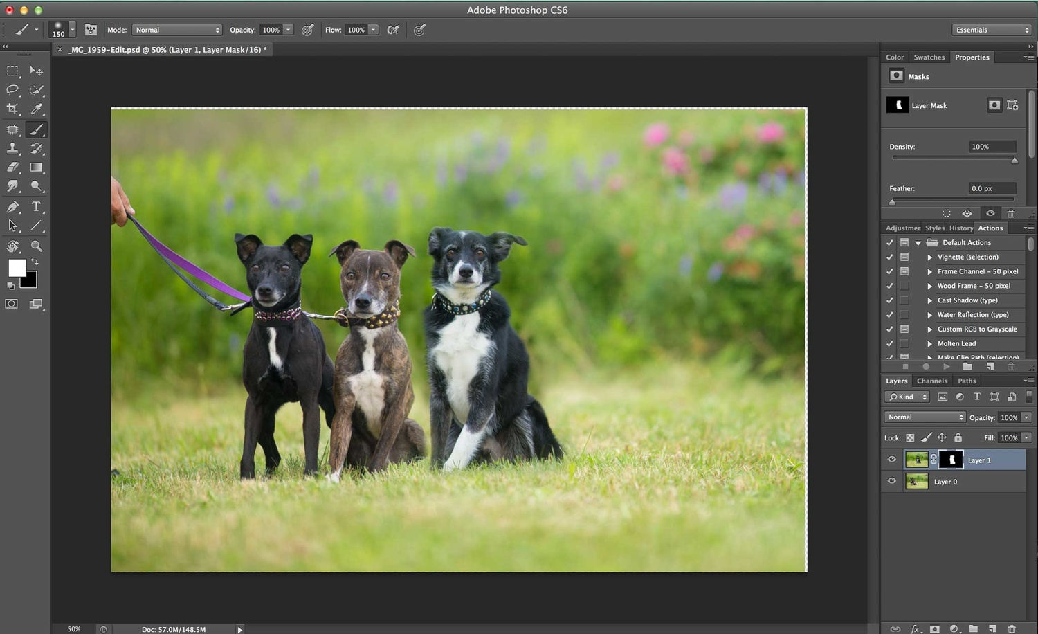 Compositing a dog group photo - Step 5