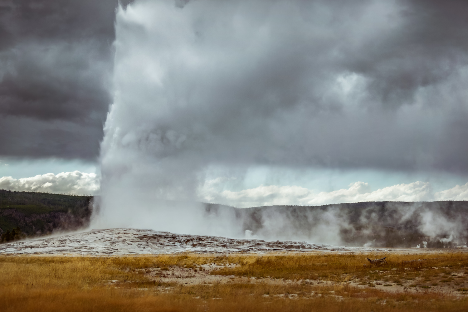 daytime shot of the old faithful geyser in yellowstone national park