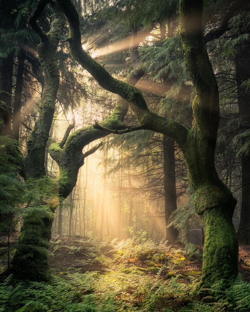 Fine Art Landscape Photography (Part 3): The Introvert Mind