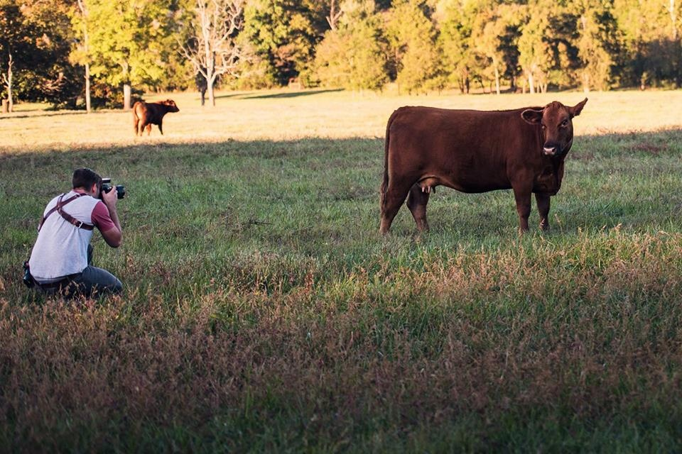 Writer Jason Vinson kneeling in a cow field