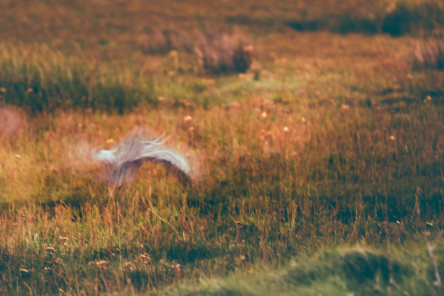Abstract photograph of a heron taking flight.