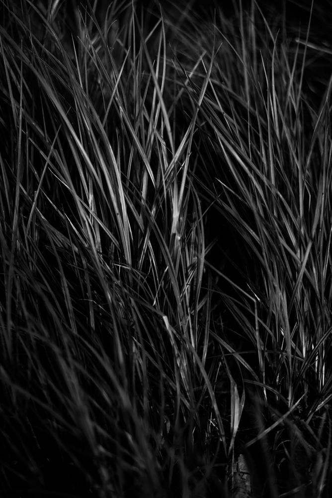 line-theme-nature-photograph