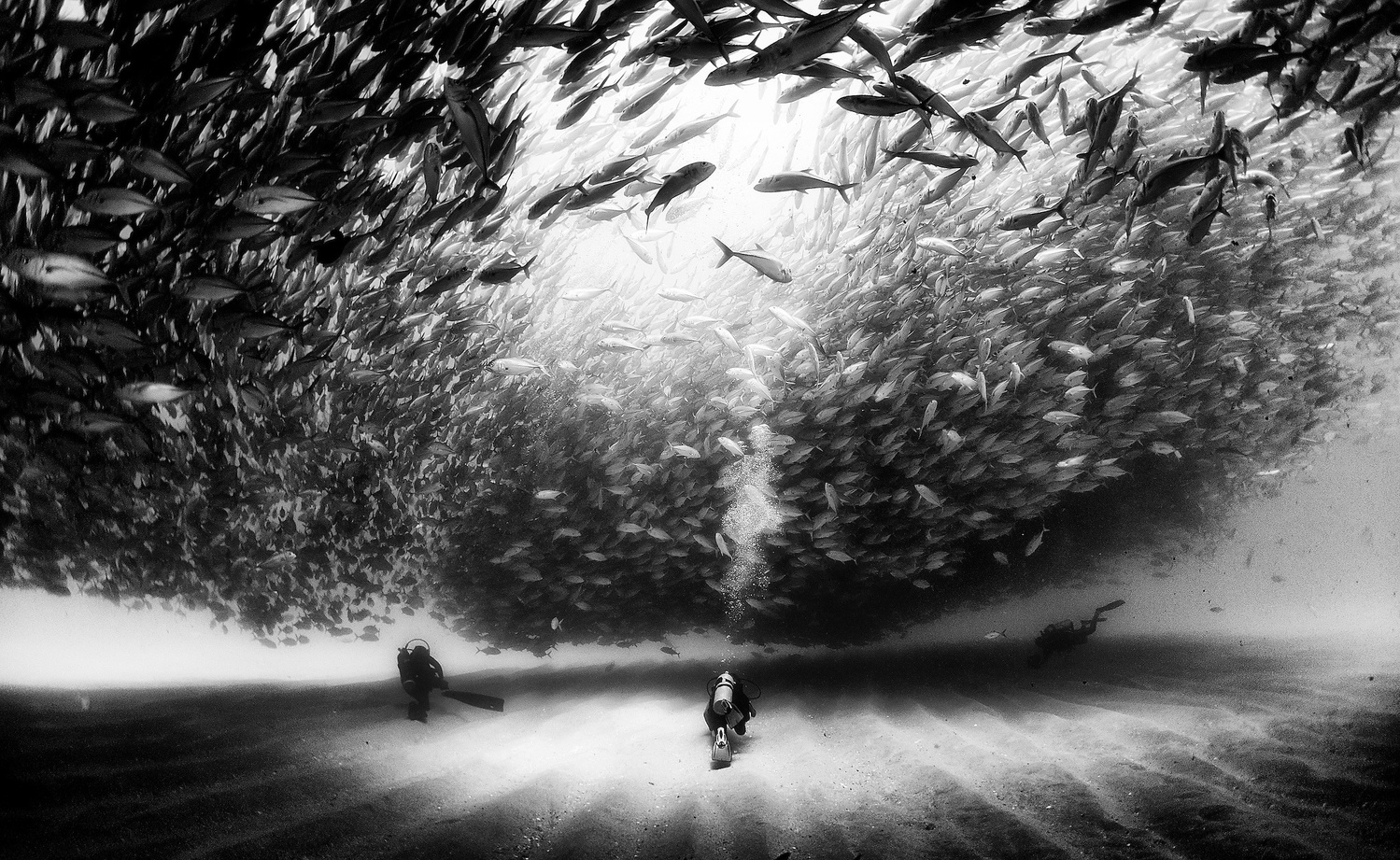 Floriuk shows us a black and white underwater world where shoals of fish huge whales and apex predators capture our imagination