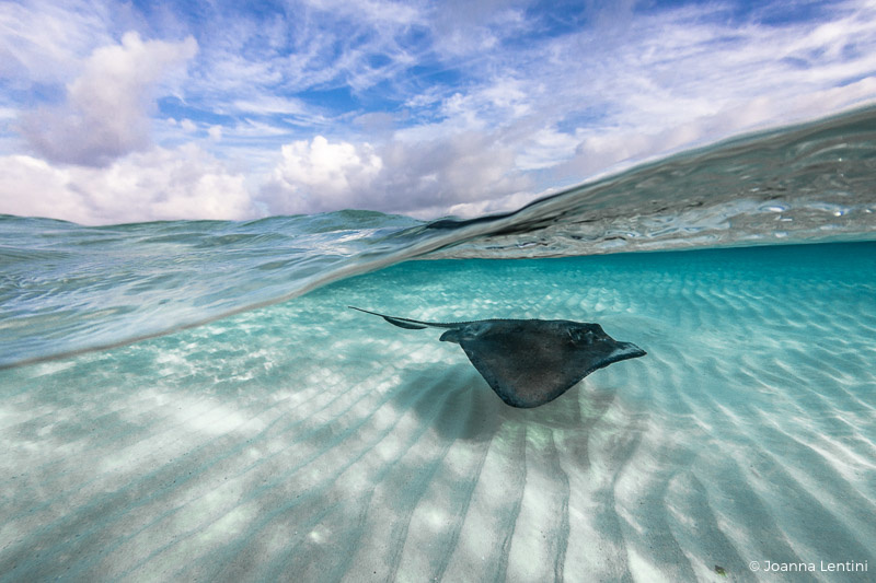 over-under, split shot, underwater photography, grand cayman, cayman, stingray