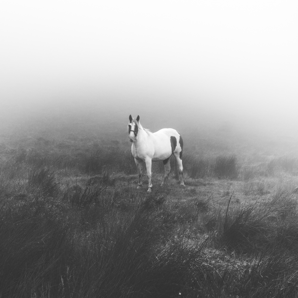 A horse in the fog stands staring at the photographer.