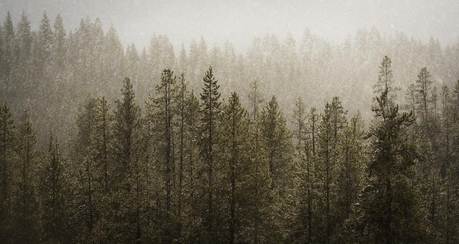 trees-photograph-tim-behuniak
