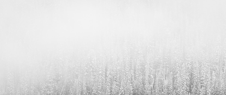 fresh-snow-on-trees-photograph-by-timothy-behuniak