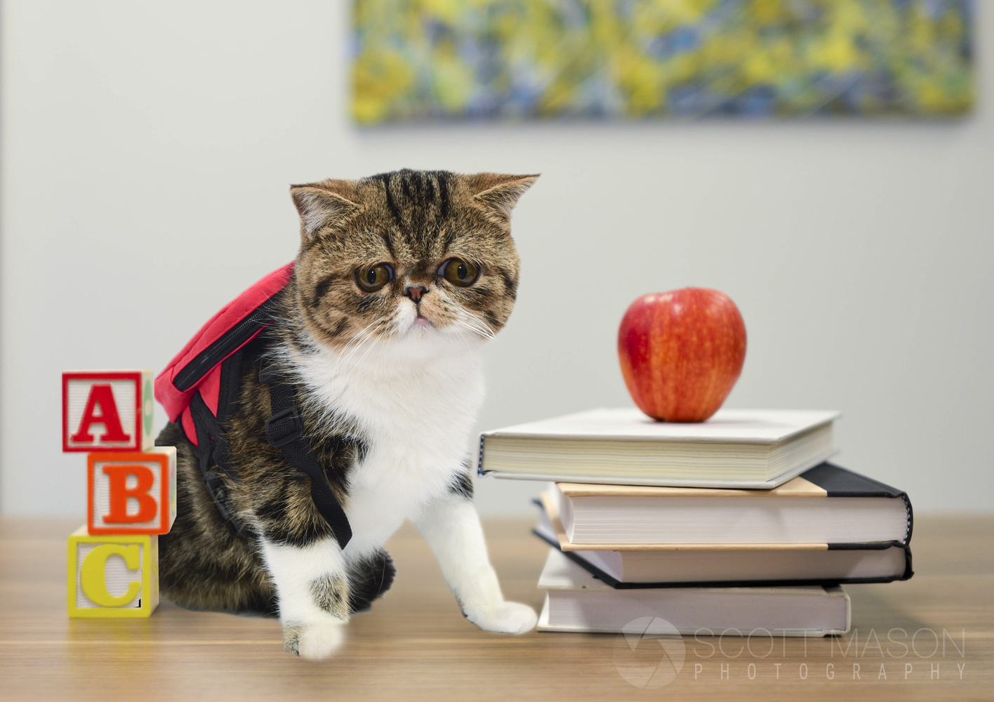 a cat in a back-to-school scene with a backpack on