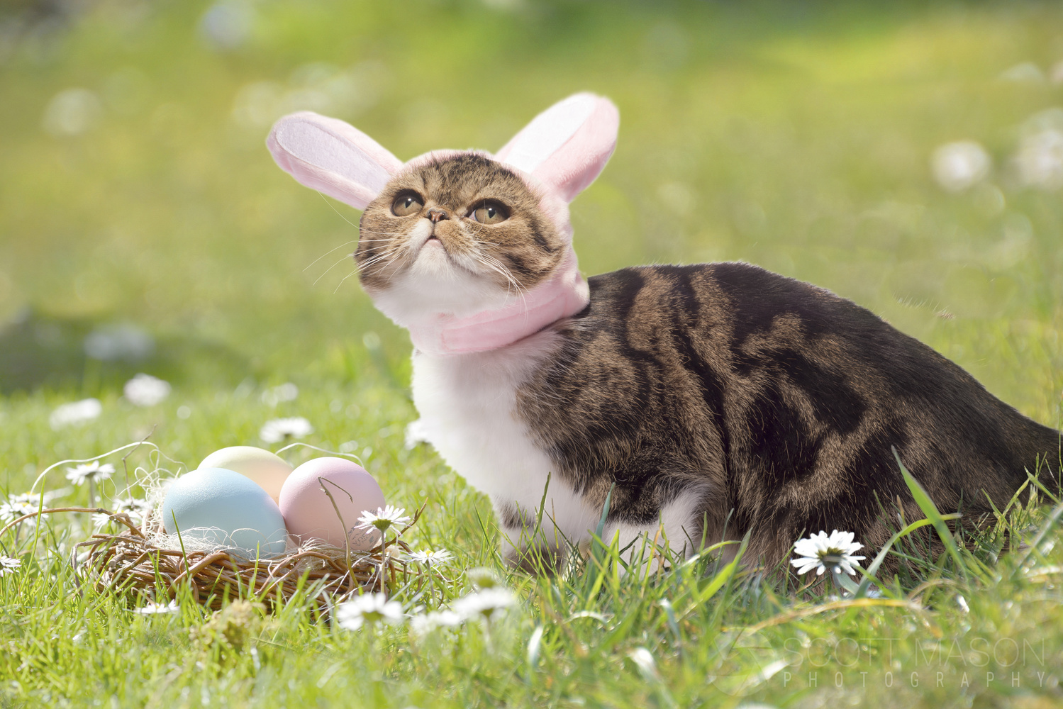 a cat wearing bunny ears in a field with easter eggs