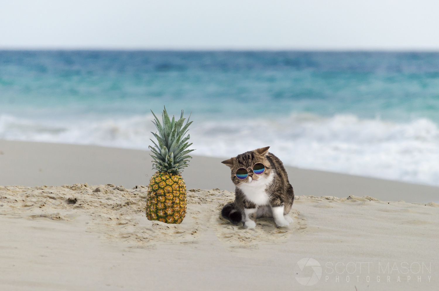 a cat on a beach wearing sunglasses, next to a pineapple