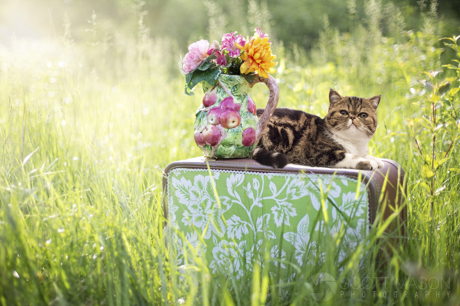 a cat sitting on a suitcase in a field
