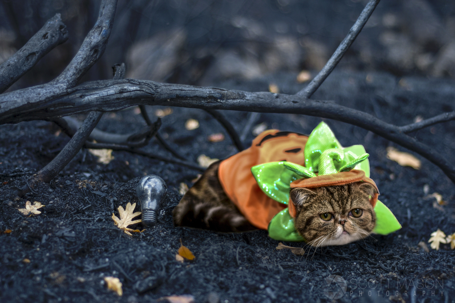 a cat with a pumpkin outfit on, huddled under a tree branch