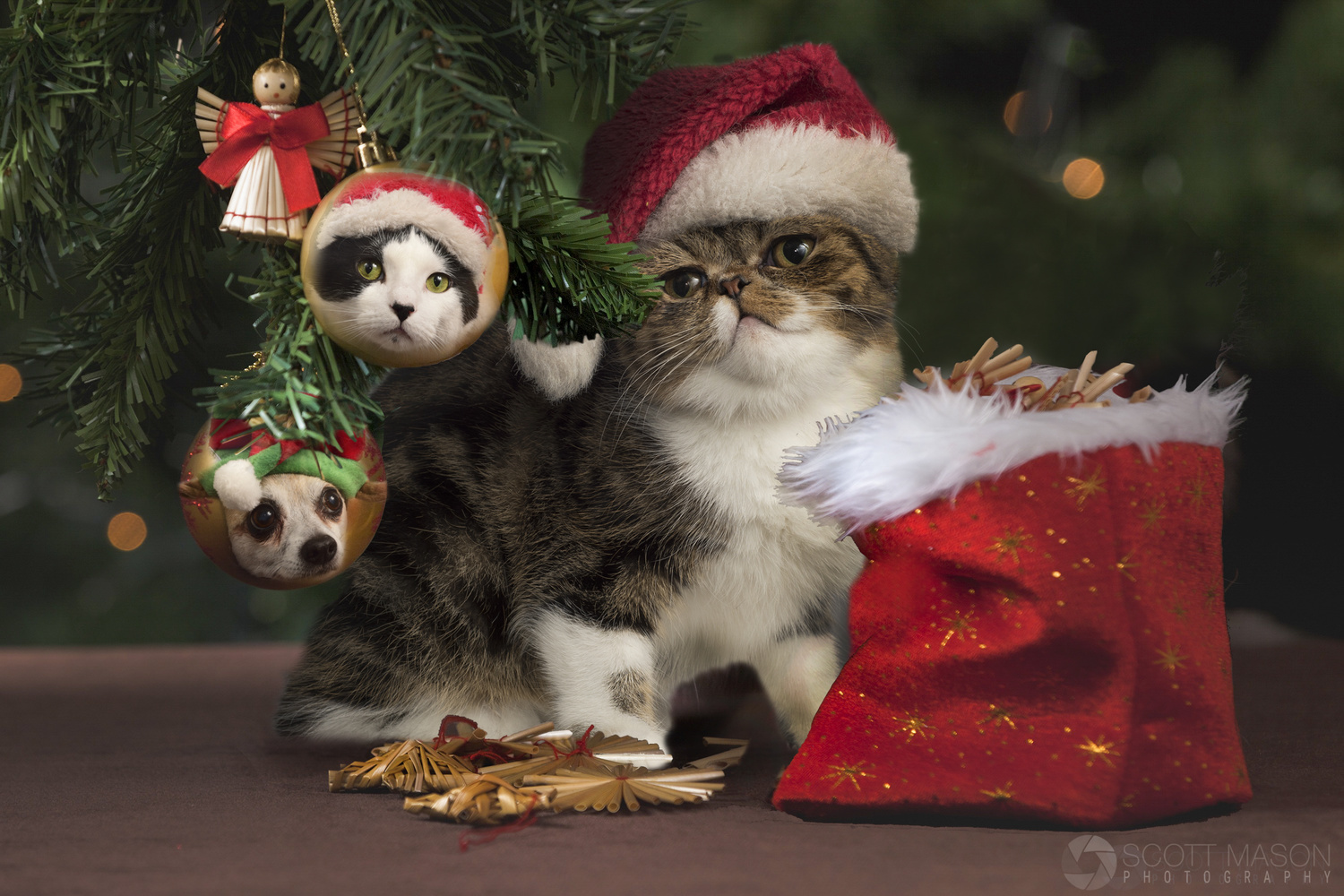 a composite image showing a cat under a christmas tree, with ornaments of pet faces