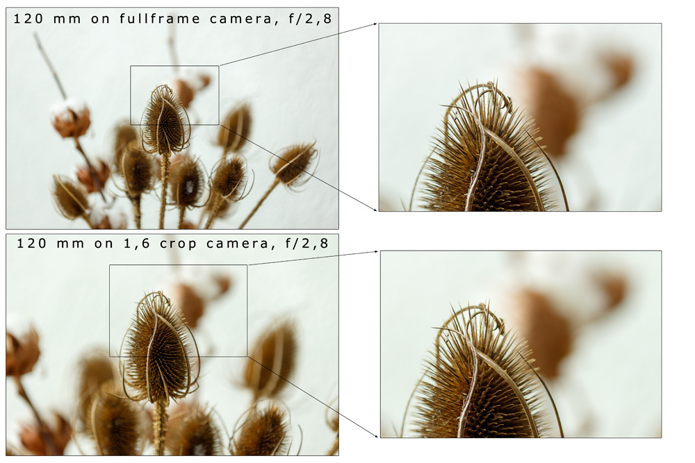 When viewed in the same magnification you see sensor size does not change depth of field, as long as focal length, aperture and distance is kept the same. This is because a crop sensor only captures a part of what a full frame sensor would.