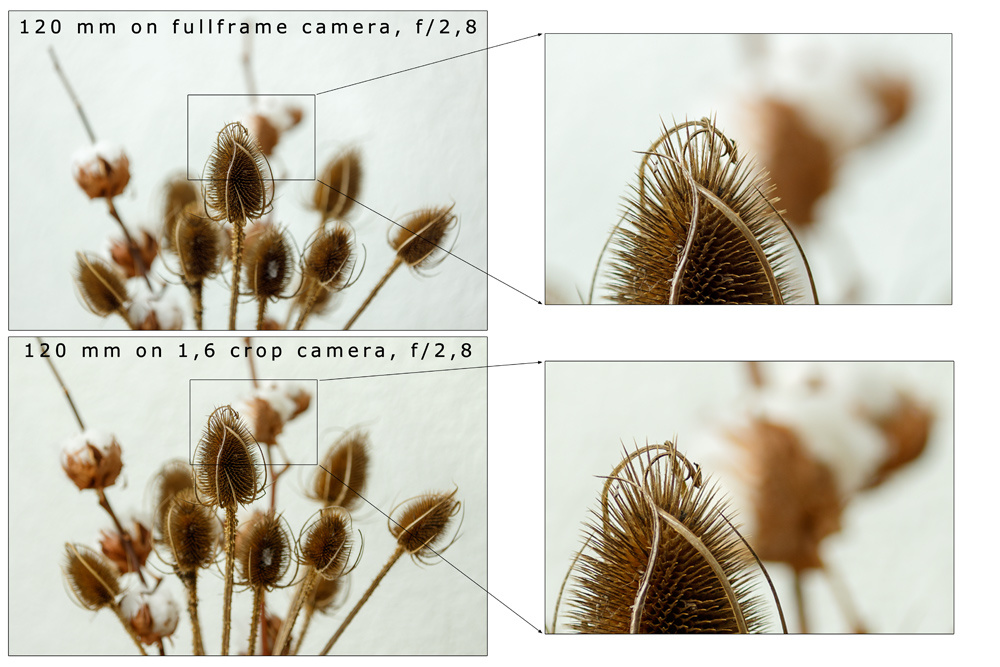 Instead of decreasing focal length, you can also increase the distance to the subject to achieve the same picture. Aperture and focal length are kept the same. As you can see the depth of field is increased with the crop sensor