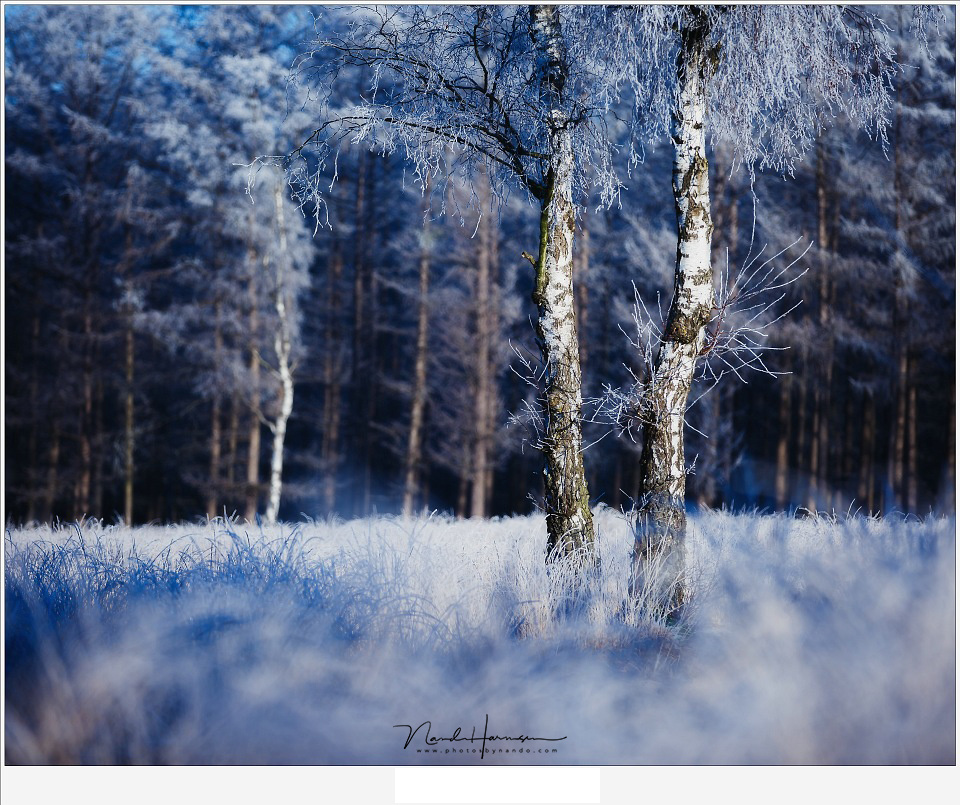 These winter birches are clearly standing free from the background because of the smaller depth of field. (EOS 5D3 + EF70-200L | ISO100 | f/2.8 | 1/1600)