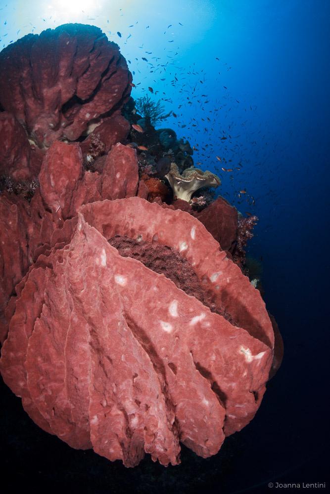 close focus, underwater photography, tokina 10-17, joanna lentini