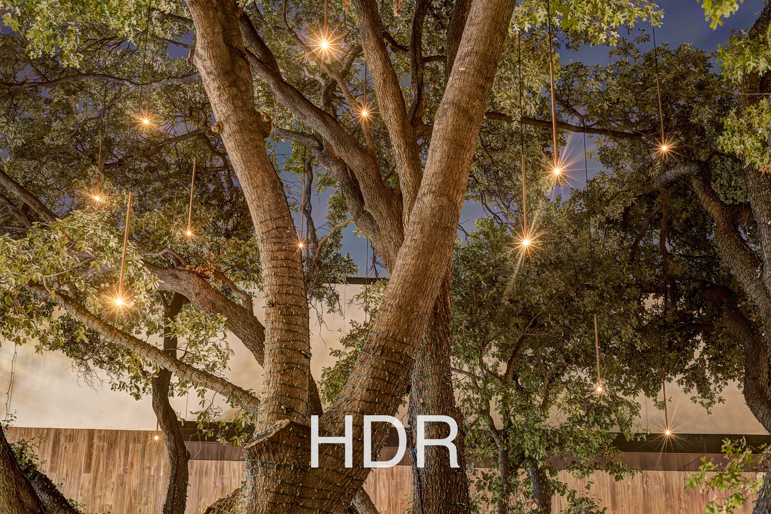 an HDR photo of a tree with lights