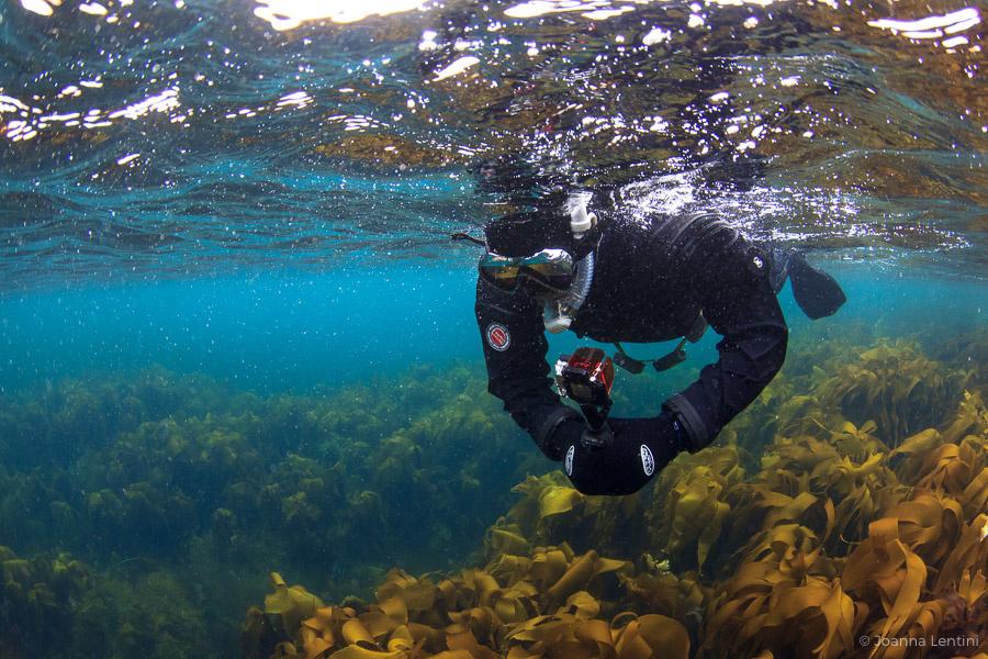 underwater photography etiquette, joanna lentini