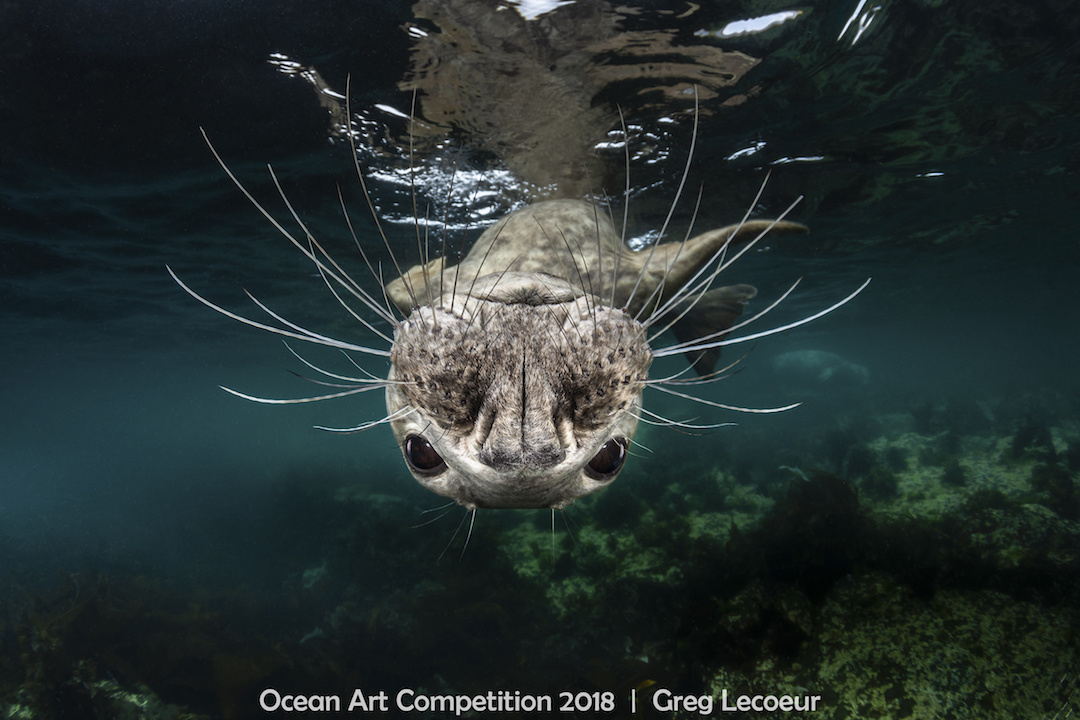 ocean art competition, underwater photography