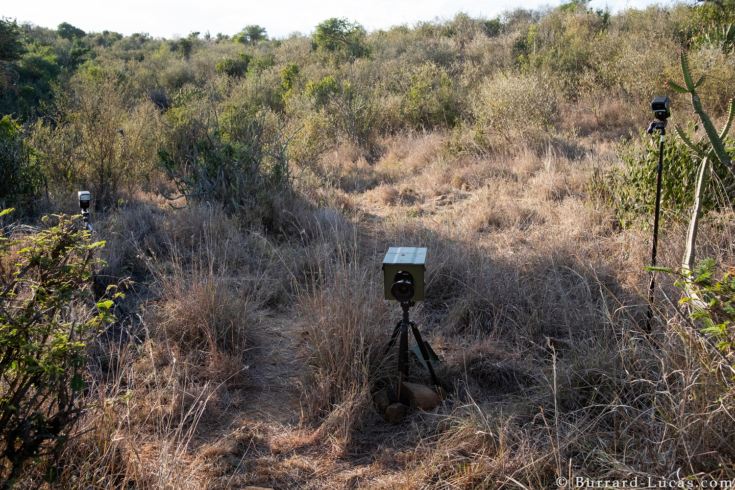 a behind-the-scenes image showing a remote wildlife photography setup in Kenya