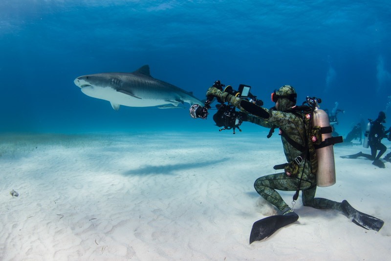 Joanna Lentini, underwater photography, staying safe when photographing sharks