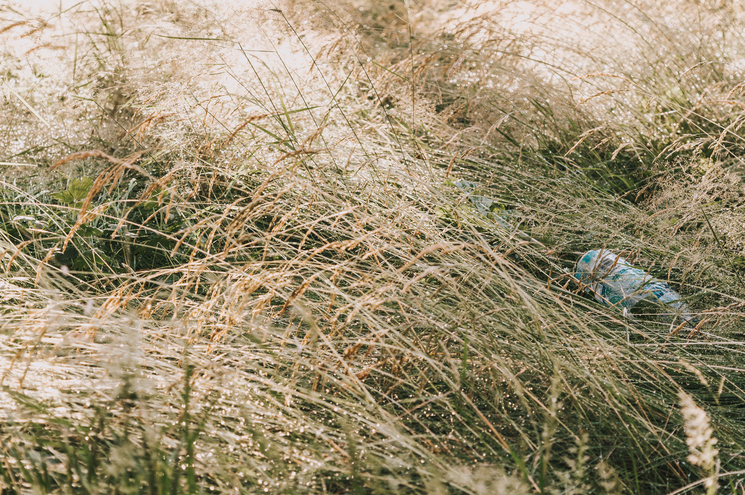 A plastic bottle discarded in tall grasses