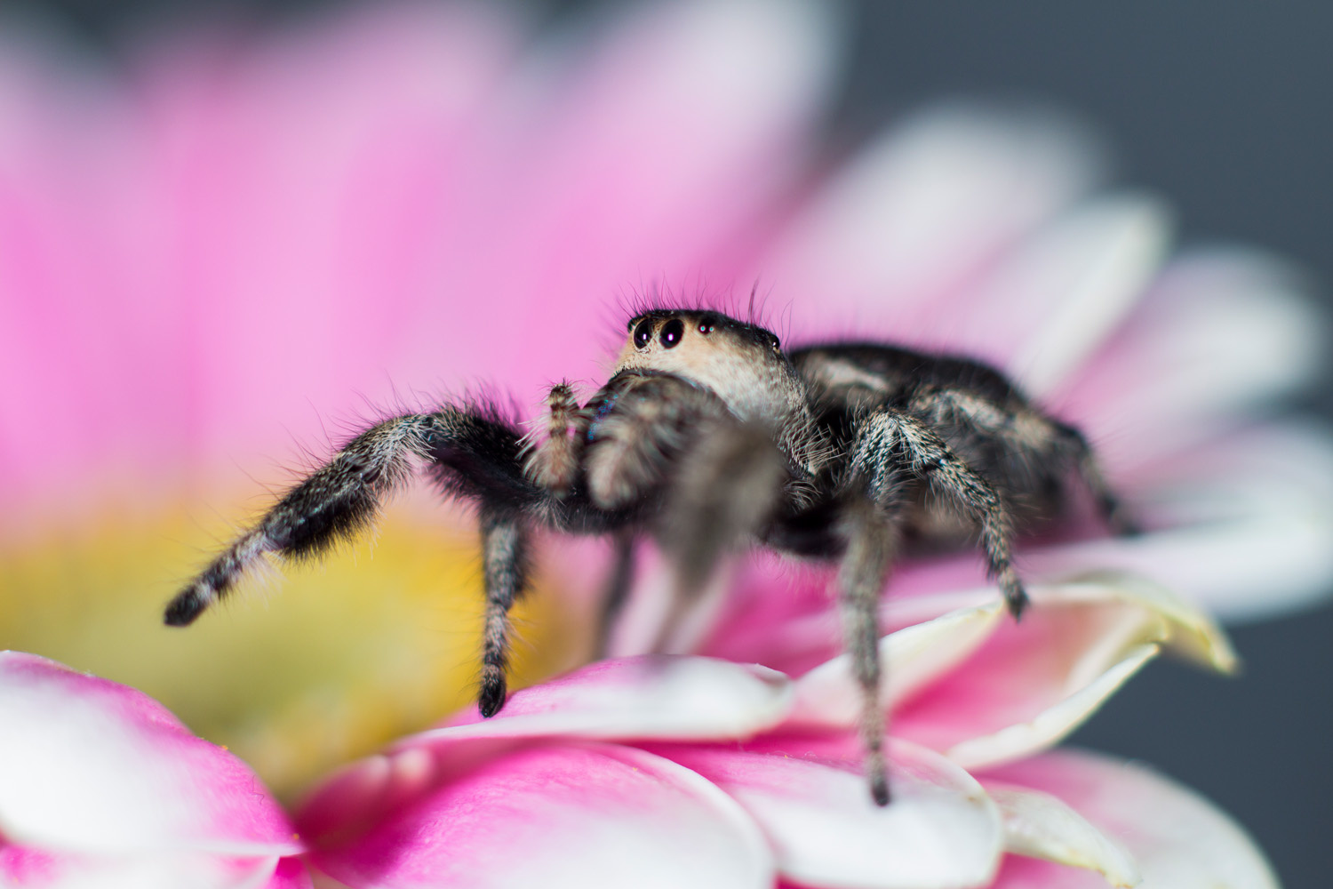 Figure 4: Focusing on the eyes will help improve your macro images.