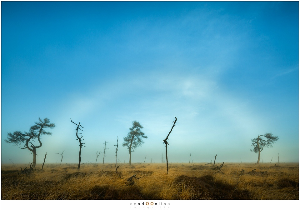 A fogbow early in the morning after sunrise at the Skeleton Trees of Noir Flohay. (Canon EOS 5D3 with TS-E17mm shifted | ISO100 | f/13 | 1/80)