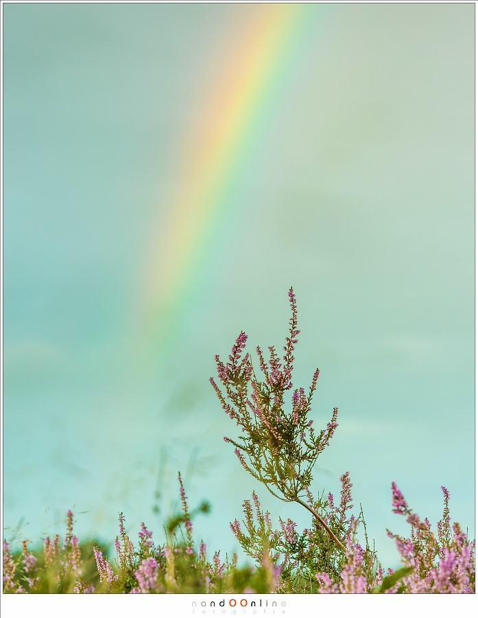 Even with a reasonable small depth of field you can capture the colors of the rainbow. I used it in this picture as a backdrop (Canon EOS 53 with 140mm | ISO200 | f/8 | 1/30)