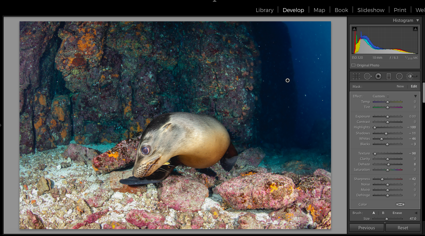 adobe, lightroom, joanna lentini, backscatter