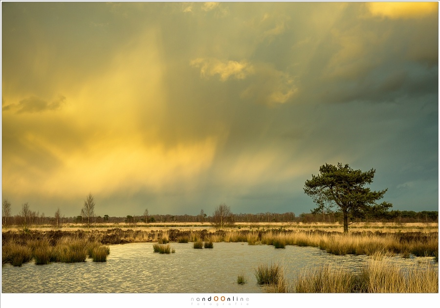 Amazing light during sunset, with anti-crepuscular light rays opposite to the sun. The light is reflected in the rain clouds at the horizon. (Canon EOS 5D3 + 50mm | ISO200 | f/8 | 1/80)