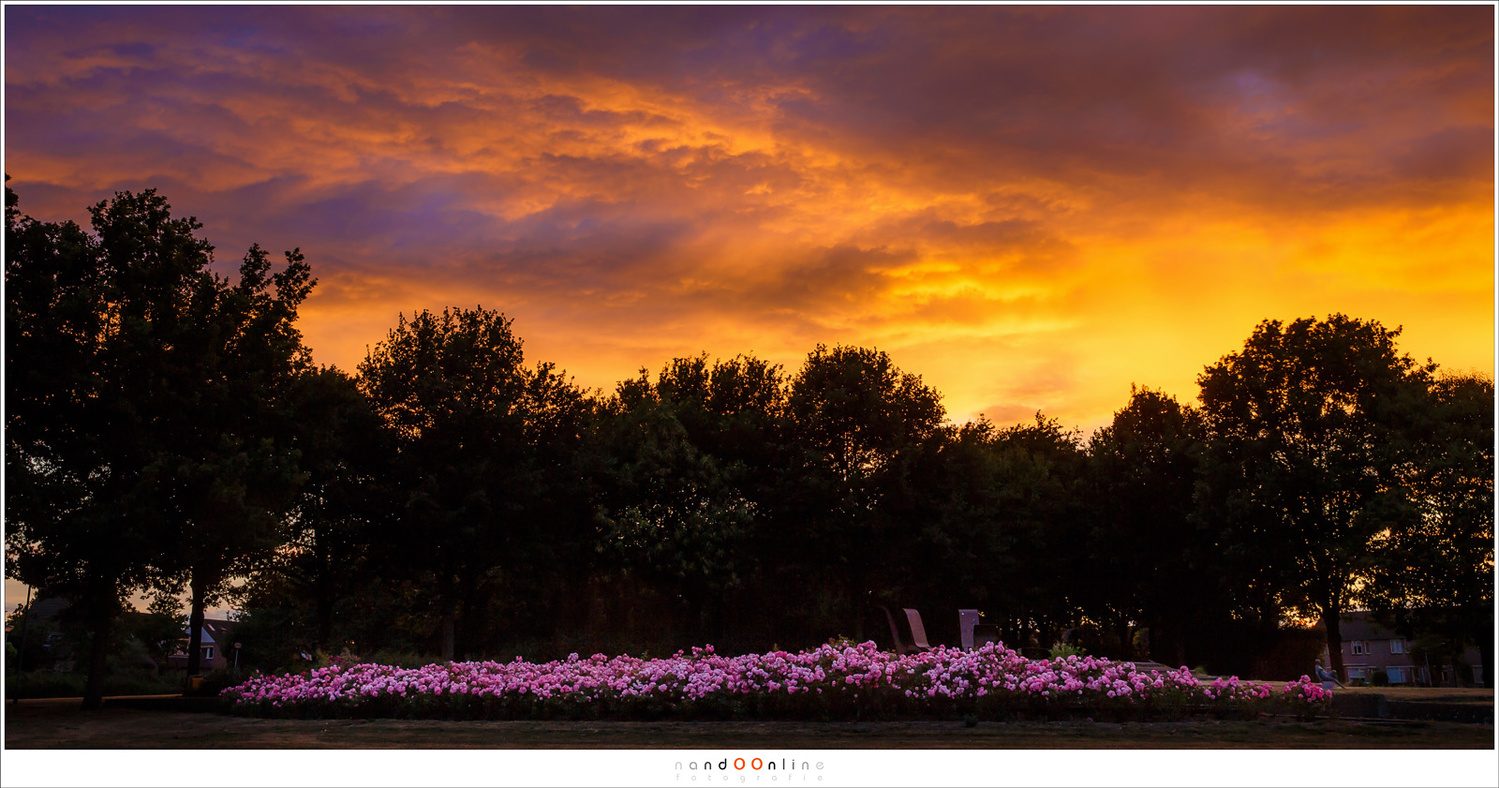 A bed of roses in the park was a nice foreground for the sky that was on fire one evening. A very nice composition, if I may say, just around the corner, in the park (Canon EOS 1Dx + 35mm | ISO100 | f/9 | 1/20)